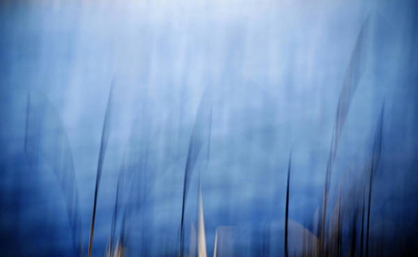 Photograph - Blue Reed by Marilyn Hunt