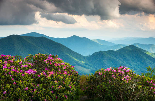 Appalachian Mountains Photograph - Blue Ridge Appalachian Mountain Peaks And Spring Rhododendron Flowers by Dave Allen