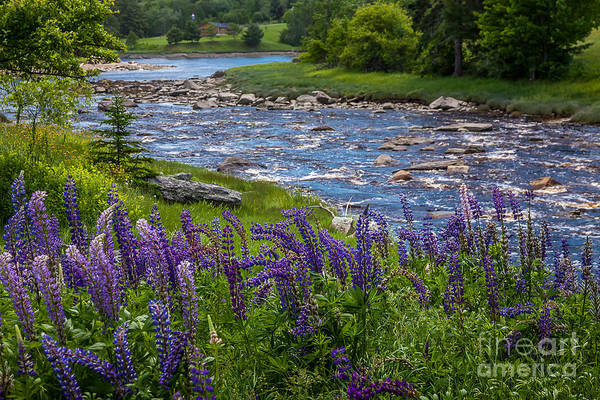 Photograph - Blue River by Susan Cole Kelly