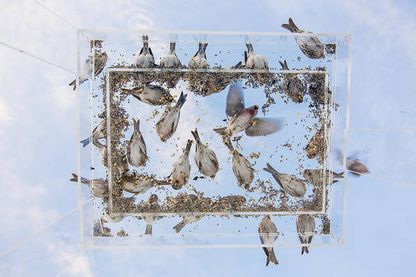 Crossbill Photograph - Blue Skies Above The Bird Feeder by Tim Grams