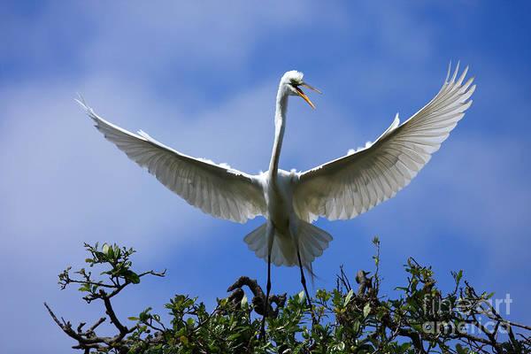Photograph - Blue Sky Landing by John F Tsumas