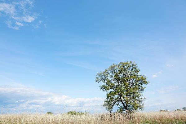 Scenery Photograph - Blue Sky by Tsuntsun