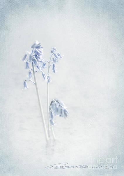 Photograph - Blue Softness by Gouzel -