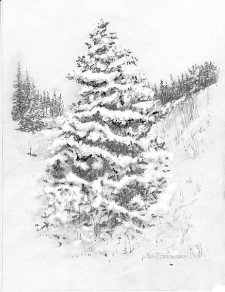 Wall Art - Drawing - Blue Spruce  by Jim Hubbard