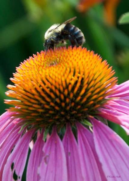 Blue Striped Bee Art Print