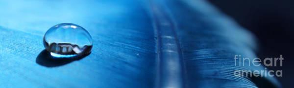 Wall Art - Photograph - Blue Sublime by Krissy Katsimbras