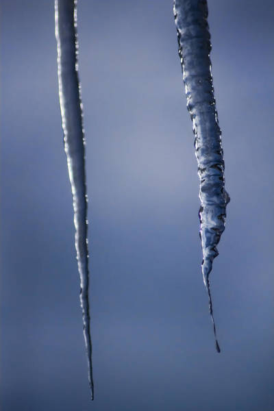 Photograph - Blue Tinted Icicles by Sven Brogren