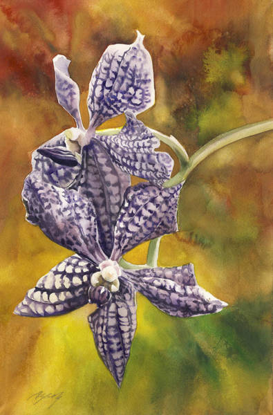 Painting - Blue Vanda Orchids by Alfred Ng