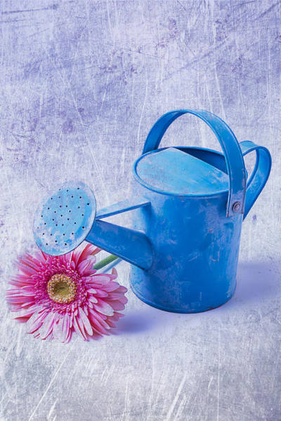 Tin Can Wall Art - Photograph - Blue Watering Can With Daisy by Garry Gay