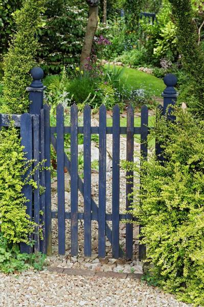 Lonicera Photograph - Blue Wooden Gate by Geoff Kidd/science Photo Library