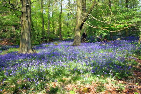 Wall Art - Digital Art - Bluebell Wood by Anthony Forster