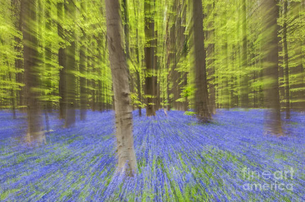 Photograph - Bluebells Abstract by Arterra Picture Library