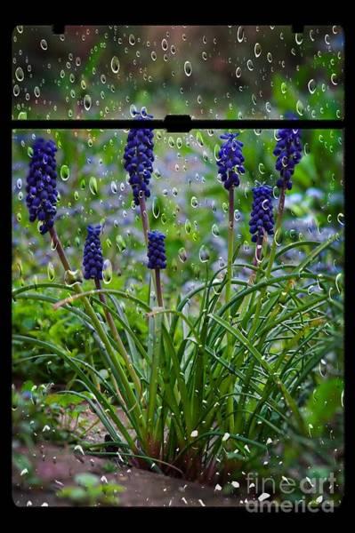 Wall Art - Photograph - Bluebells In The Rain by Donald Davis