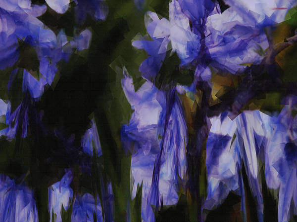 Photograph - Bluebells by Nigel Watts