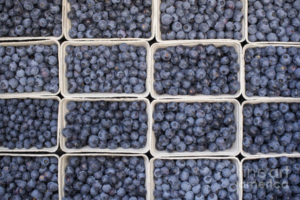 Pick Photograph - Blueberries by Tim Gainey