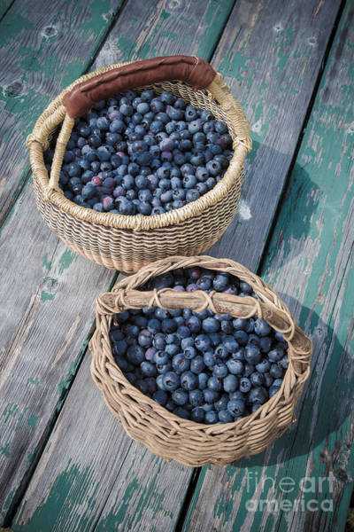 Picnic Basket Wall Art - Photograph - Blueberry Baskets by Edward Fielding