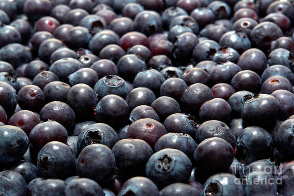 Blue Berry Photograph - Blueberry Galore by Olivier Le Queinec