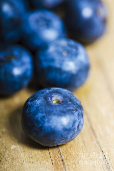 Blue Berry Photograph - Blueberry Macro by Jorgo Photography - Wall Art Gallery