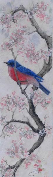 Bluebird In Cherry Blossoms Art Print by Sandy Clift