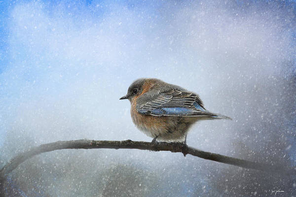 Photograph - Bluebird In The Snow by Jai Johnson