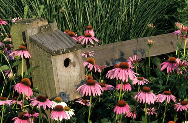 Birds Nest Photograph - Bluebird Nest Box On Fence Near Purple by Richard and Susan Day