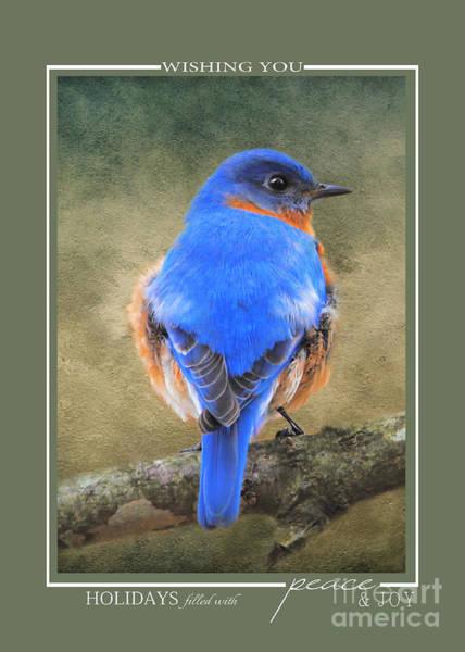 Photograph - Bluebird Wildlife Christmas Cards by Jai Johnson