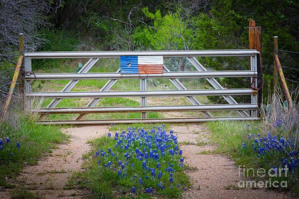 Photograph - Bluebonnet Gate by Inge Johnsson