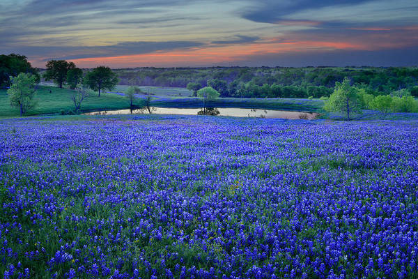 Indian Photograph - Bluebonnet Lake Vista Texas Sunset - Wildflowers Landscape Flowers Pond by Jon Holiday