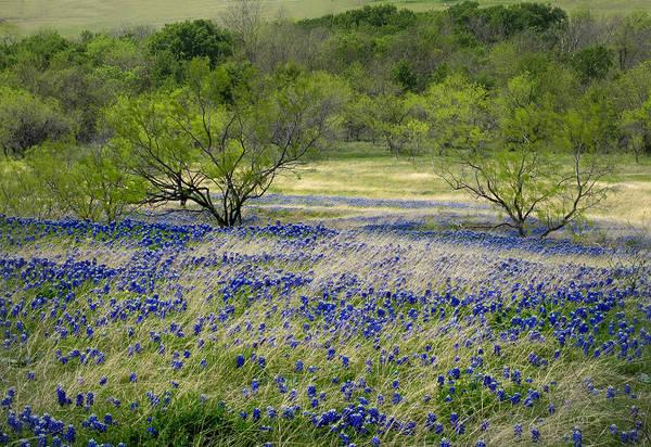 Texas Bluebonnet Photograph - Bluebonnet Meadow by David and Carol Kelly