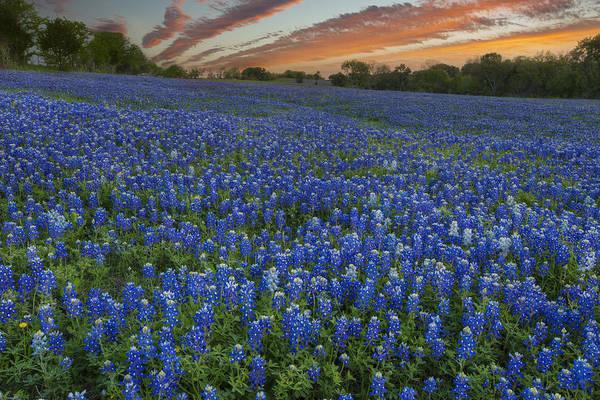 Texas Bluebonnet Photograph - Bluebonnet Pictures - Sunset Over A Bluebonnet Field by Rob Greebon
