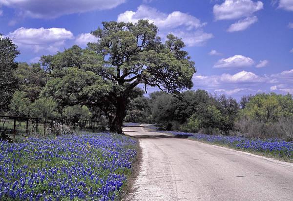Texas Bluebonnet Photograph - Bluebonnet Road by David and Carol Kelly