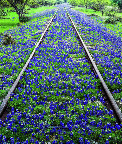 Southern Usa Photograph - Bluebonnet Wildflowers And Old Railroad by Dszc