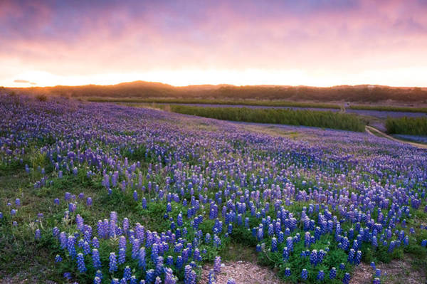 Wall Art - Photograph - Bluebonnets After The Storm - Wildflower Field In Texas by Ellie Teramoto