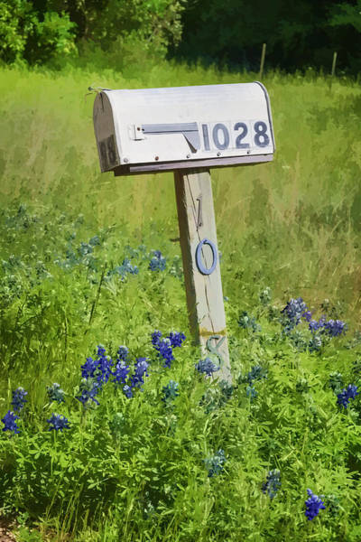 Photograph - Bluebonnets And Mailbox by Joan Carroll