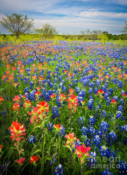 Expanse Photograph - Bluebonnets And Prarie Fire by Inge Johnsson