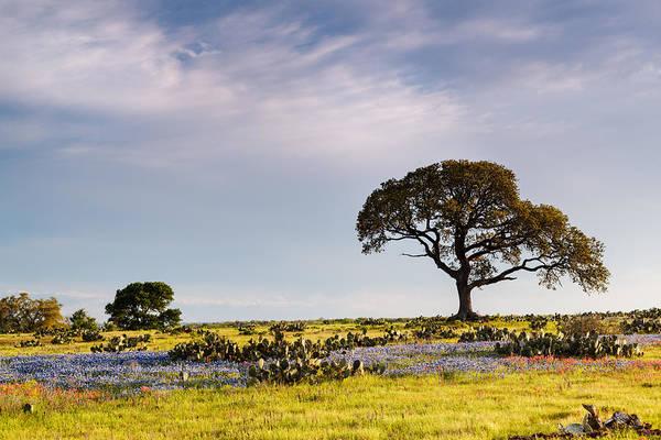 Photograph - Bluebonnets And Prickly Pear Cacti - La Grange Texas by Silvio Ligutti