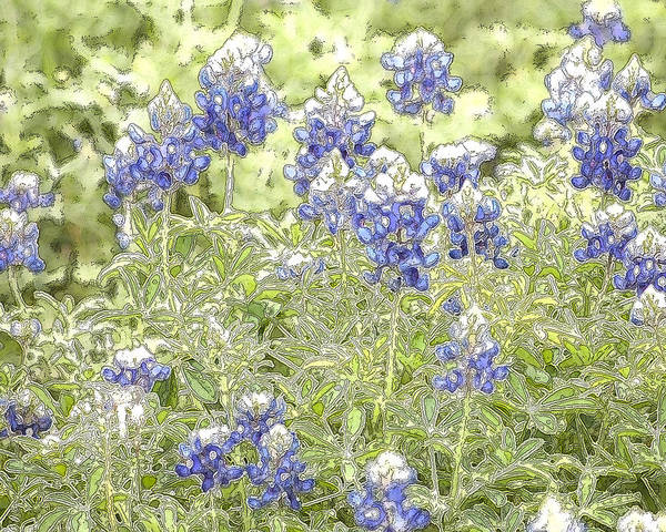 Texas Bluebonnet Digital Art - Bluebonnets In A Field by Jeanne A Martin