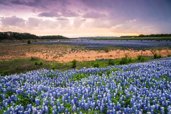 Wall Art - Photograph - Bluebonnets On The Colorado River Bank - Wildflower Field In Texas by Ellie Teramoto