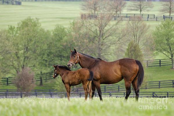 Foal Photograph - Bluegrass Family - D002766 by Daniel Dempster