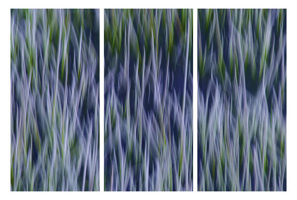 Photograph - Bluegrass Triptych by Sherri Meyer