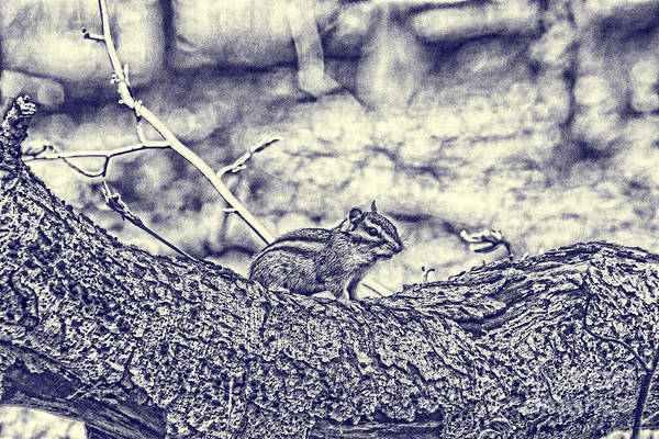 Photograph - Blueprint-chipmunk by Jim Lepard