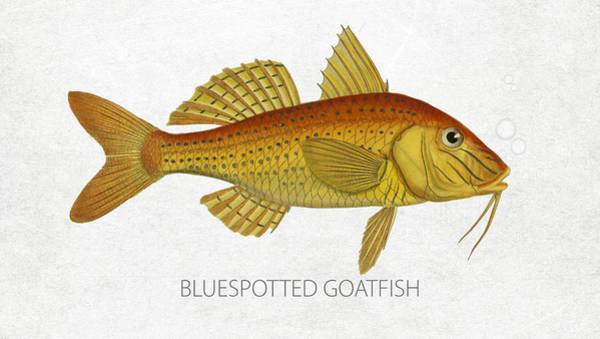 Wall Art - Digital Art - Bluespotted Goatfish by Aged Pixel