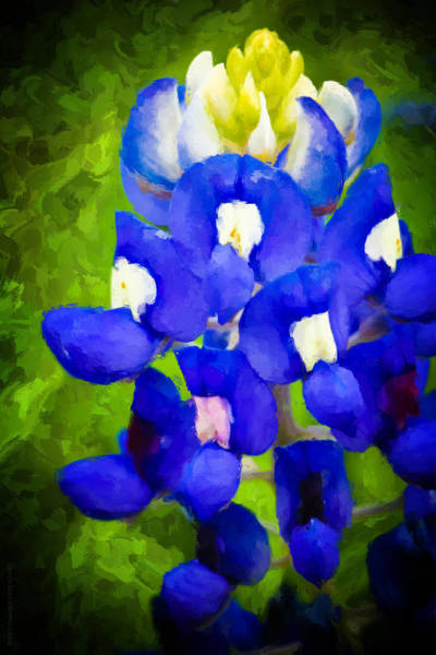 Texas Bluebonnet Digital Art - Bluest Blue by Kaye Adams