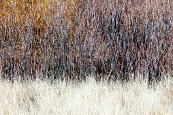 Wall Art - Photograph - Blurred Brown Winter Woodland Background by Elena Elisseeva