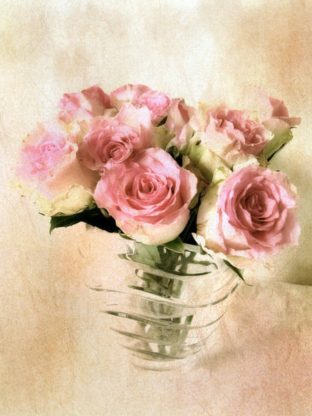 Photograph - Blush Rose by Jessica Jenney
