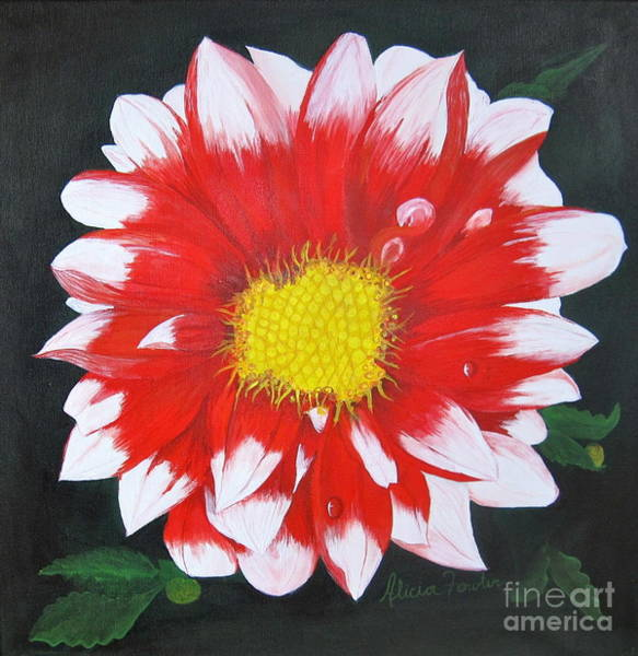 Painting - Blushing Dahlia by Alicia Fowler