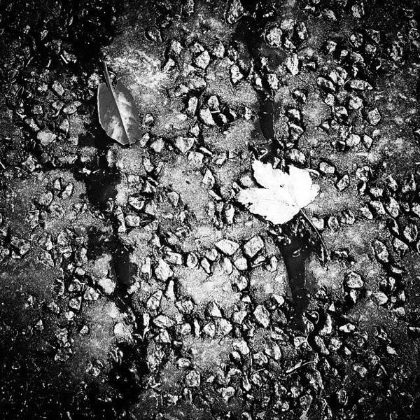 Creative Wall Art - Photograph - Leaves In The Wet Black 'n' White by Jason Michael Roust