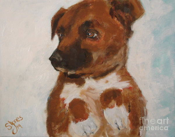 Painting - Bo Jack by Shelley Jones
