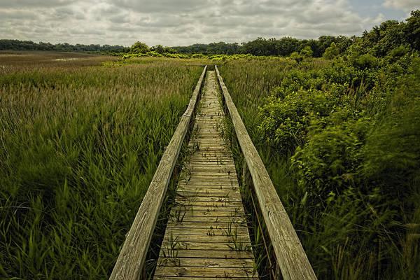 Photograph - Boardwalk Into Nature by Jonathan Davison
