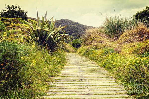 Wall Art - Photograph - Boardwalk Through Bush New Zealand by Colin and Linda McKie